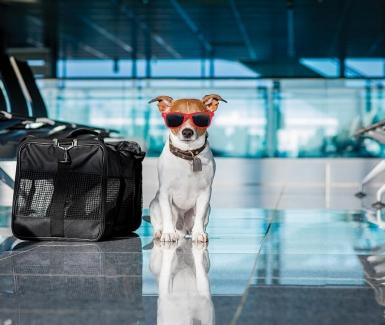 ¿Viajar en avión con tu mascota en fechas decembrinas? Consejos para que vuele segura