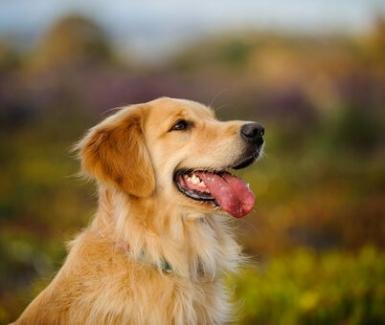 ¿Cómo hacer atractiva la comida de nuestro perro?